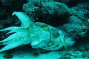 Fun Dives in Gili Islands
