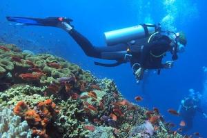 Fun Dives in Gili Trawangan