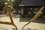 Full Day Komodo Island Speedboat Tour