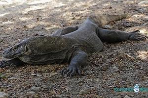 3 Days Komodo National Park Liveaboard