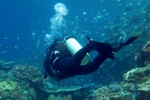 Komodo Island 1 Day 2 Dives