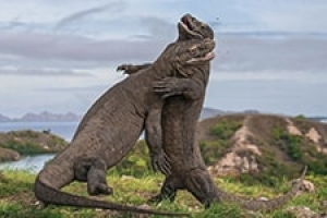 4 Days 3 Night Komodo National Park Tour
