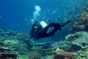 One Day Komodo Dive Trip