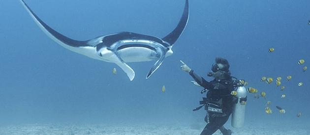 Komodo Island Dive Package Tour