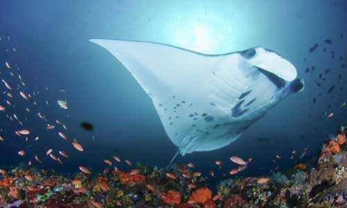 Top 10 Komodo National Park Dive Sites