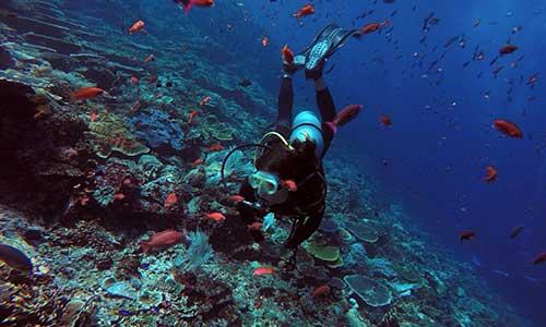 Top 10 Komodo National Park Dive Sites, Corals