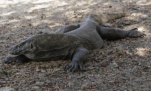 2 Days Komodo National Park Tour