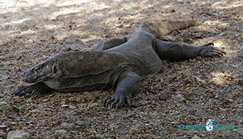 3 Days Komodo National Park Liveaboard