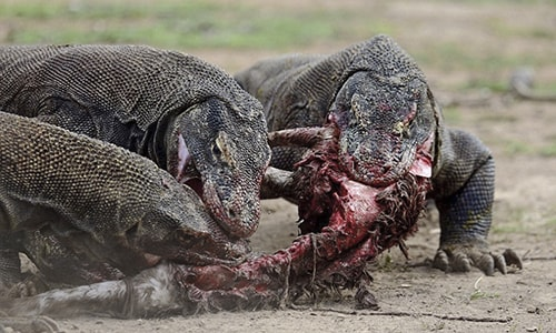 3 Days Sharing Komodo Tour Package