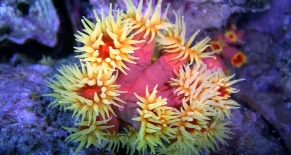 Fun Dive-Sanur-Bali Dive Site